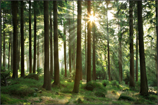 Taking the Measure of Forest Carbon