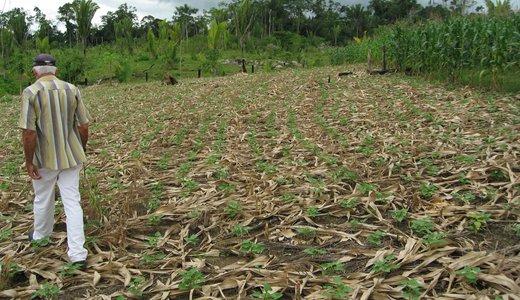 Brazilian Forest Code (PI Jill Caviglia-Harris) = Andrew Bell 02.jpg