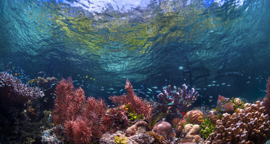 Coral Reef_Biodiversity Podcast.jpg