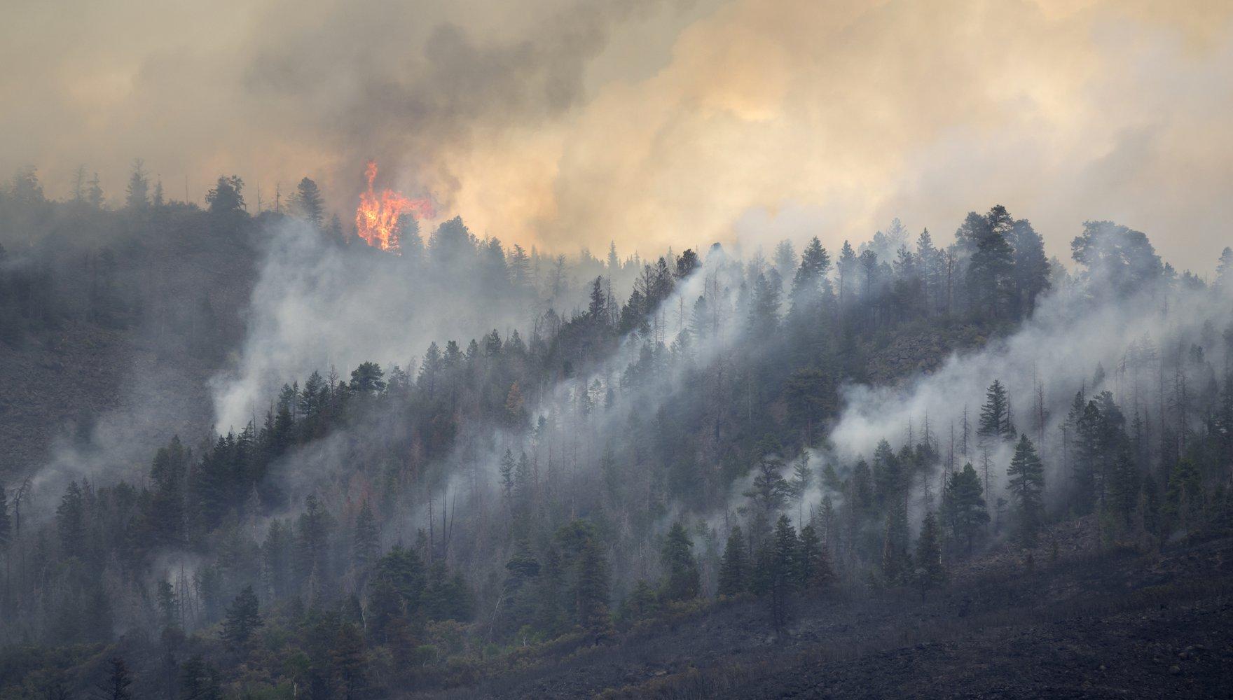 Wildfire Wibbenmeyer