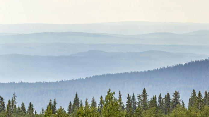 Landscape_Carbon Removal.jpg