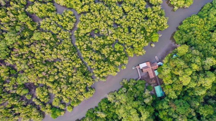 mangrove pic.jpg