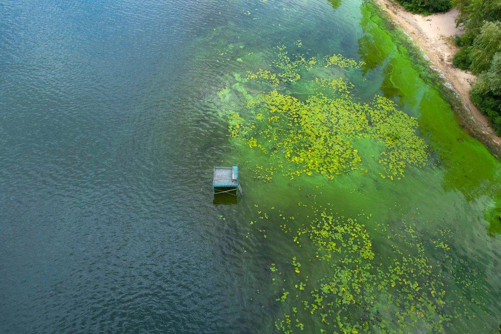 Harmful algal bloom on water - blooming blue-green algae top view